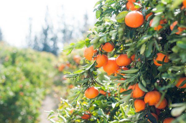 Rhubarb & Raspberry <br/>Fruit Spread <br/>150g jar 5