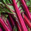 Rhubarb & Raspberry <br/>Fruit Spread <br/>150g jar 1