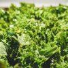 CHIPS <br>Organic Kale Chips <br> MELBOURNE <br> 1