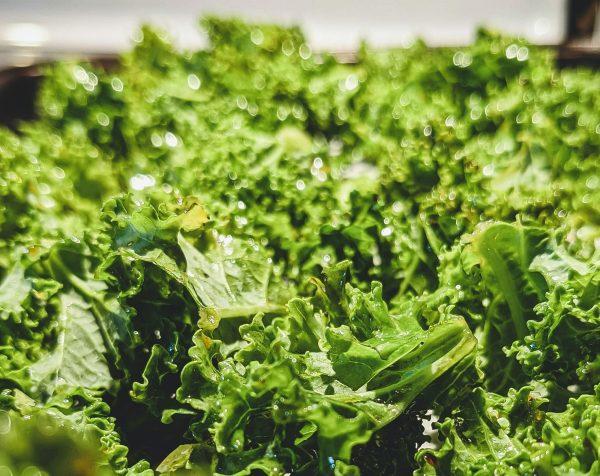CHIPS <br>Organic Kale Chips <br> MELBOURNE <br> 3